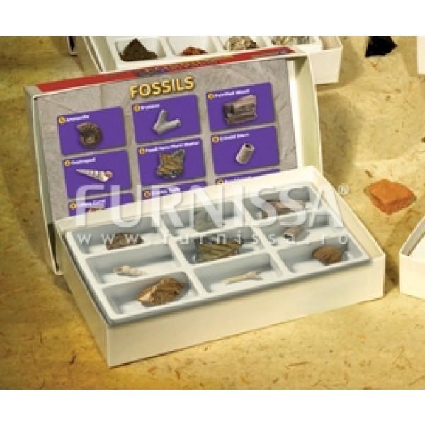 Colectie de Fosile