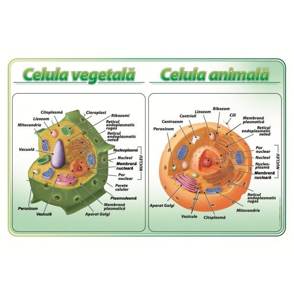 Celula vegetala-animala