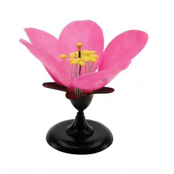 Floarea piersicului