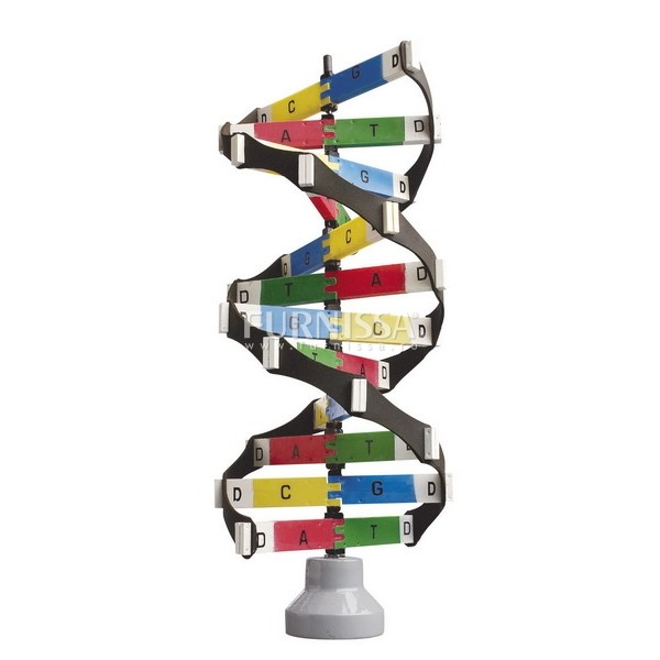 Model ADN