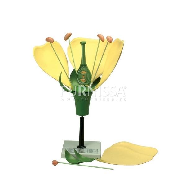 Model floare