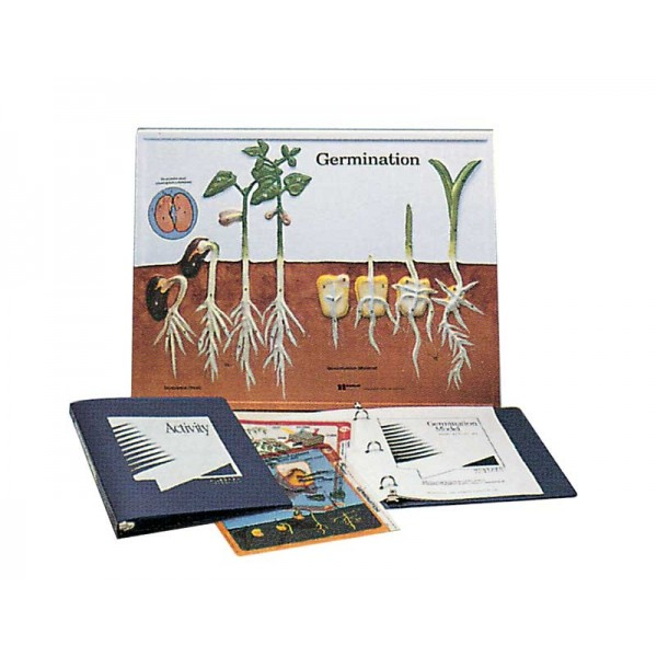 Model pentru germinare (incoltire)