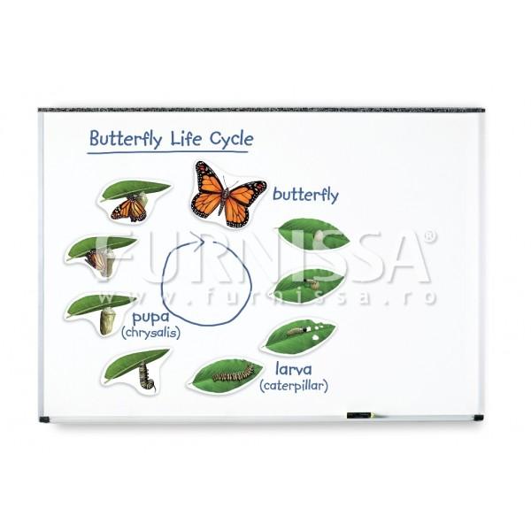 Set Magnetic Urias -Ciclul de Viata al Fluturelui