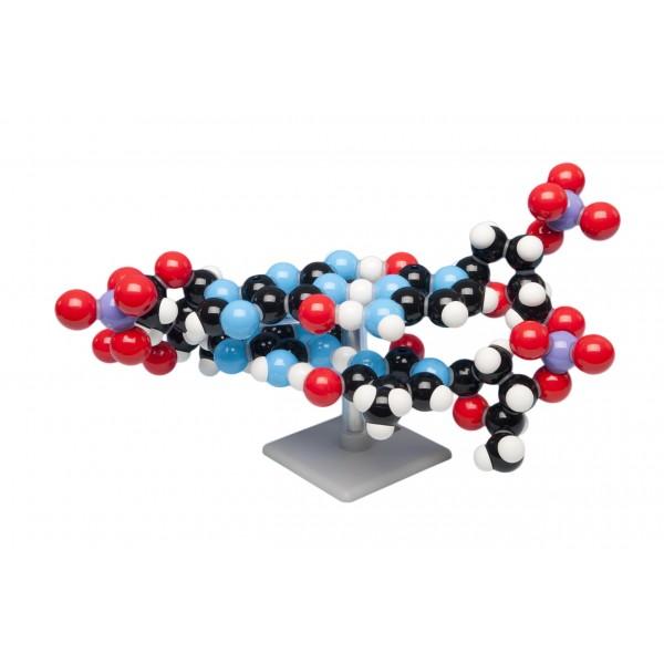Trusa model ADN